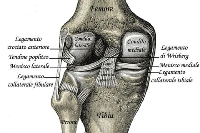 Allineamento delle ginocchia - Centro Pandava IYENGAR® YOGA